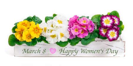Primroses for March 8 - Happy Women's Day Standard-Bild