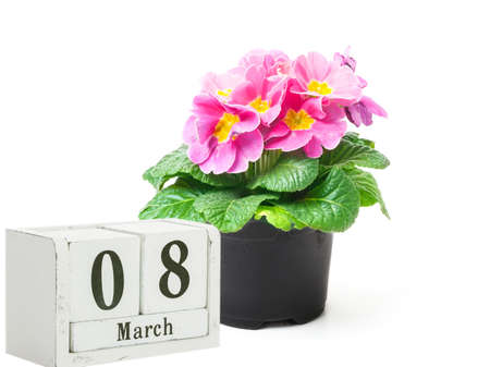 Primroses for March 8, wooden calendar and flower pot