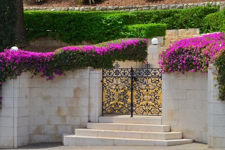 bahai: Haifa Bahai gardens metal gate and steps framed flowers