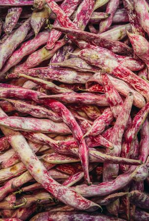 Cranberry bean also called Borlotti on a indoor food market called Mercato Delle Erbe in Bologna city, Italy