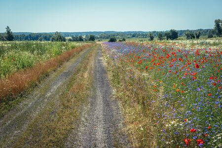Road next to meadow with blue cornflowers and red field roses in full bloom near Modlimowo village located in West Pomerania region of Poland