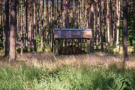 Wooden feeder for wild animal in forest near Walcz town, West Pomerania region of Poland