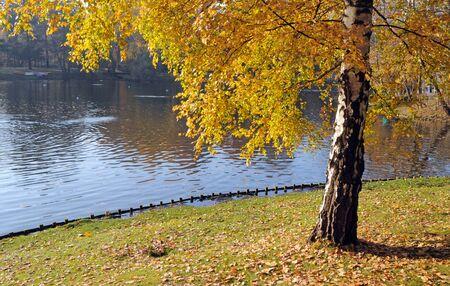 yellow leaves birch tree in the Royal Baths park in Warsaw, Poland Standard-Bild