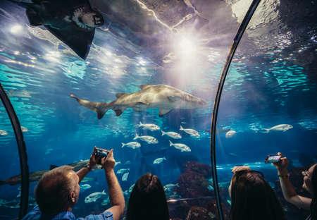 Barcelona, Spain - May 26, 2015. Tourists looks at shark in Barcelona Aquarium