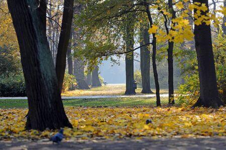 The Royal Baths Park in Warsaw, Poland - autumn season Standard-Bild