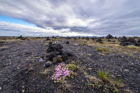 Lava field called Laufskalavarda in southern Iceland, famous for stone cairns