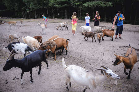 Hodenhagen, Germany - August 17, 2009: Tourists among goats and deers in Serengeti Park, zoo and leisure park in Hodenhagen municipality