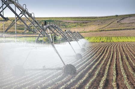 irrigation field: vegetable  field and irrigation equipment