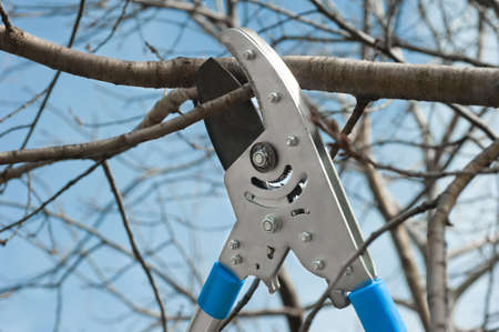 cutting tree with a pruning shears photo