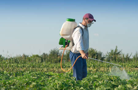 Man spraying vegetables in the garden Stock Photo
