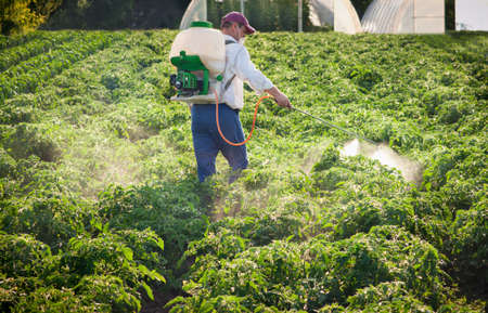 monoculture: Man spraying vegetables in the garden Stock Photo