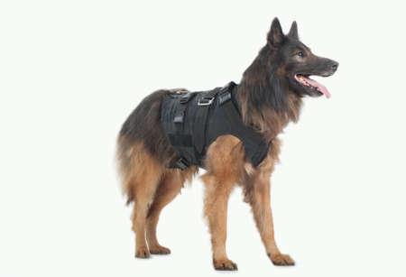 bulletproof: perro de la polic�a con balas