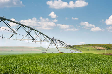 irrigation: wheat  field and irrigation equipment  Stock Photo
