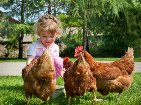 animal feed: Girl feeding chickens Stock Photo