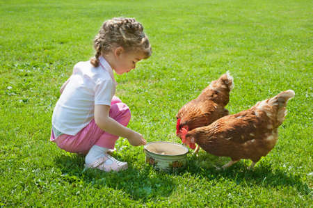 Girl feeding chickens photo