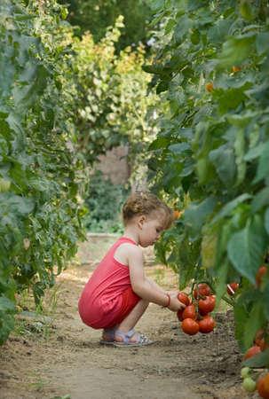 girls picked tomatoes Stock Photo