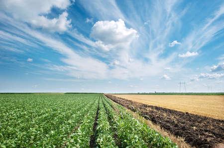 arando: Torres de electricidad en un campo de soja