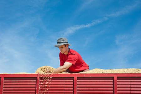 트랙터 트레일러에서 수확 후 콩을 들고 노동자