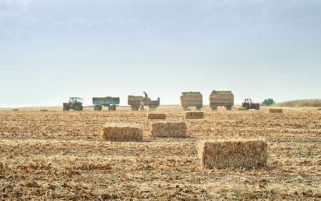 a tractor and a loader collecting straw bales in autumn photo