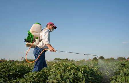 insecticide: Man spraying vegetables in the garden Stock Photo