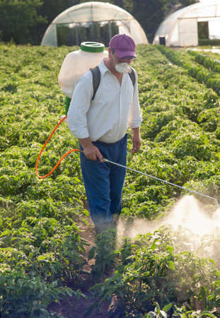 land pollution: Man spraying vegetables in the garden Stock Photo