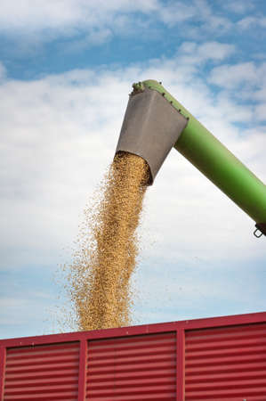 combine harvester: Pouring soy bean into tractor trailer