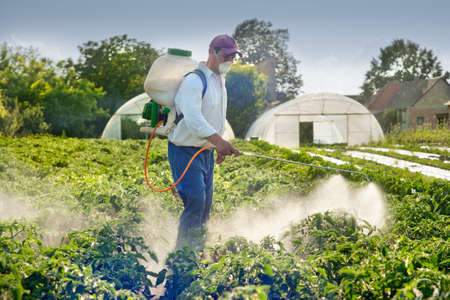 sprayer: Man spraying vegetables in the garden Stock Photo