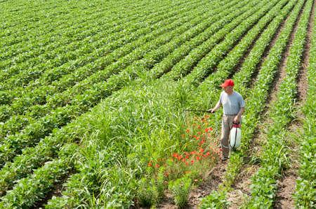 farmer spraying soybean field Stock Photo - 11268890