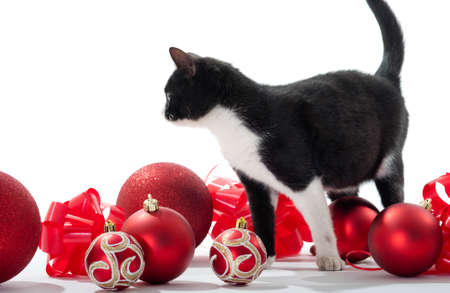 Black Kitten Christmas decorations on white background photo