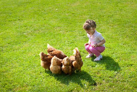 range of motion: girl and chickens in Lawn Stock Photo