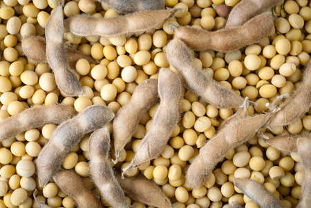 soy beans and green beans  photo