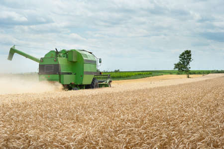 A combine harvester working in a wheat field photo