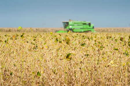 combines: A farmer combines a field of soybeans