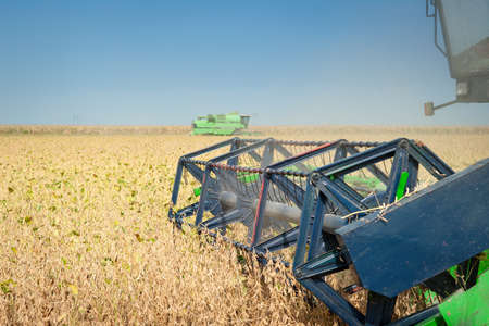 A farmer combines a field of soybeans photo