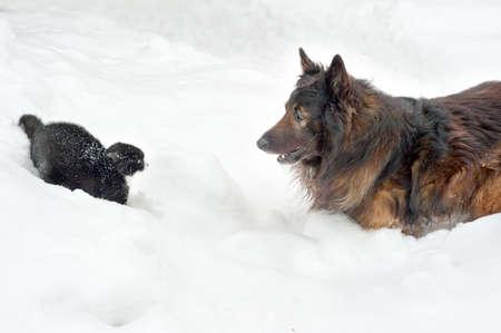 gato jugando: perro y gato jugando en la nieve