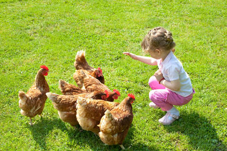 chicken farm: girl and chickens in Lawn Stock Photo