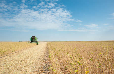 combine harvester: A farmer combines a field of soybeans