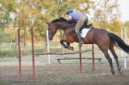 caballo saltando: muestran jumping.girl montar a caballo y saltar Foto de archivo