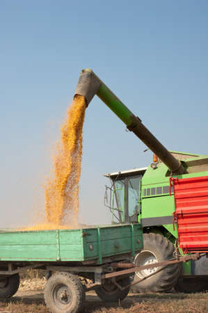 Loading of grain of corn in the  tractor trailer photo