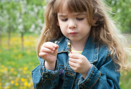 innocence: Cute little girl with dandelion