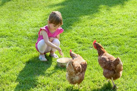 granja avicola: pequeños pollos niña de alimentación