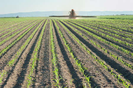 Tractor fertilizes crops corn in spring photo