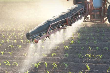 pulverizador: Tractor fertiliza el maíz los cultivos en primavera Foto de archivo