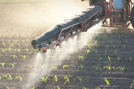 spraying: Tractor fertilizes crops corn in spring Stock Photo
