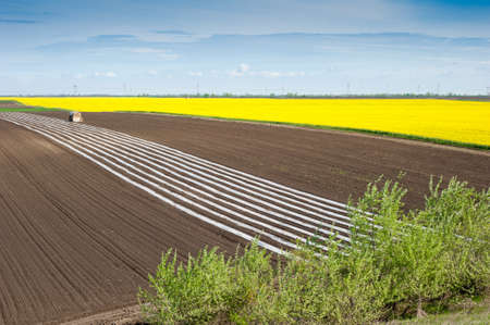 non cultivated: Yellow field rapeseed in bloom  Stock Photo