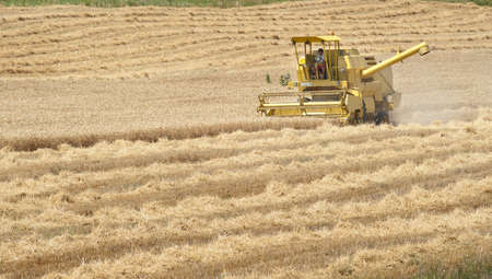 harvester: A combine harvester working in a wheat field