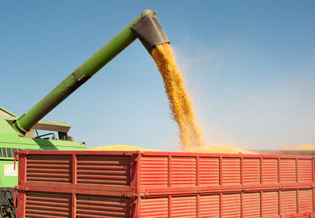 agriculture machinery: Loading of grain of corn in the  tractor trailer