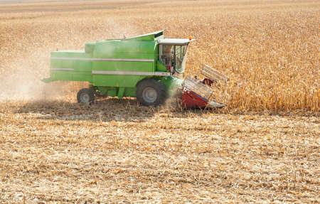 cosechadora: Un agricultor combina un campo de maíz