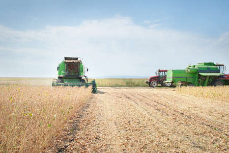 combine harvester: Harvesting of soy bean field with combine