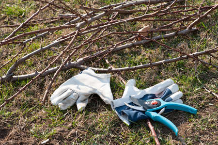 pruning: equipment for pruning trees on the ground